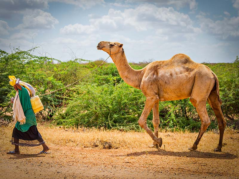 Livestock Projects Bring Hope to the Persecuted in Kenya