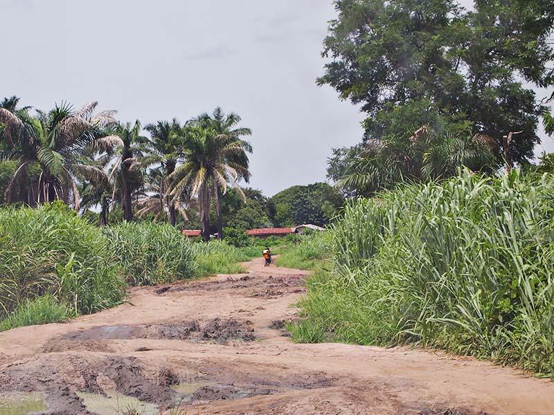 Nigerian bush