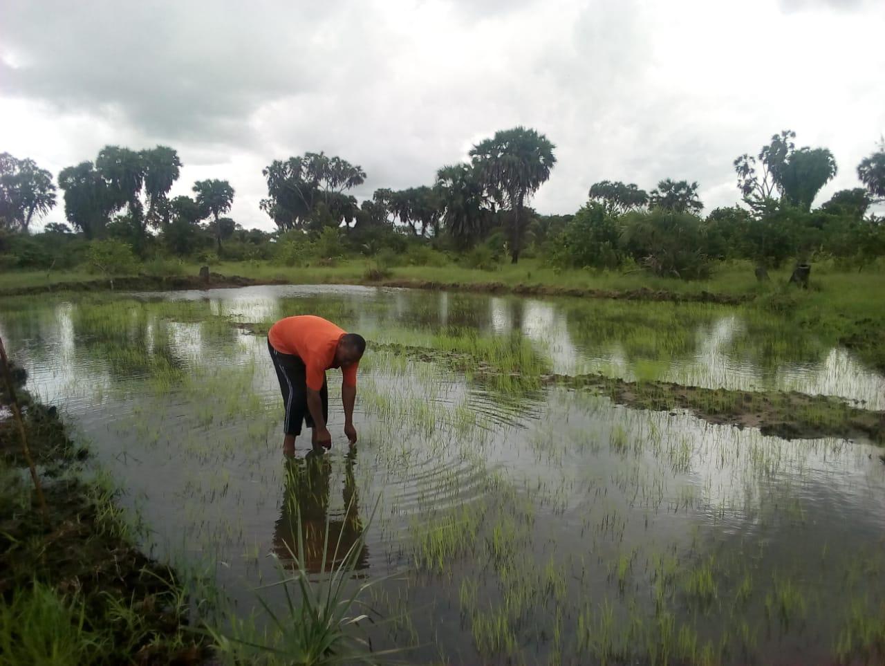 Farming assistance project in Kenya.